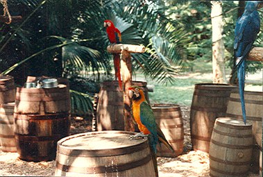 Discovery Island parrots